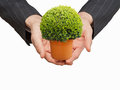 Holding a tree in palm Stock Photo