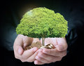 Holding tree sprouting from a handful of coins businessman Stock Images