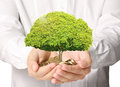 Holding tree sprouting from a handful of coins businessman Royalty Free Stock Images