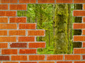 Hole in the Wall Rainforest Escape Royalty Free Stock Photography