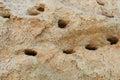 The holes nests dug by birds in slopes kulikovo kaliningrad region Stock Photo