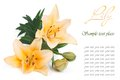 Holiday card with yellow lily and the text on a white background Royalty Free Stock Photos