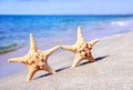 Holiday concept - two sea-stars walking on sand beach against wa Royalty Free Stock Photo
