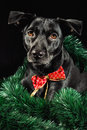 Holiday dog Stock Images