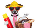 Holiday dog with thermos and basket ready for picnic Stock Images