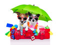 Holiday dogs on a red bag dressed as tourists Stock Photography