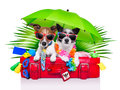 Holiday dogs on a red bag dressed as tourists Royalty Free Stock Photos
