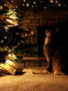 Holiday gaze Stock Photos