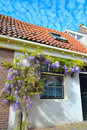 Holiday house beautiful glysine in spring on the facade Royalty Free Stock Image