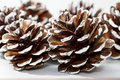 Holiday Pine Cones Stock Photo