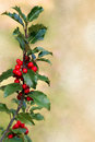 Holly Branch Stock Image