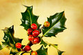 Holly branch with berries Royalty Free Stock Photo