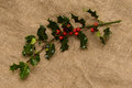 Holly branch with red berries on the bagging Royalty Free Stock Photo