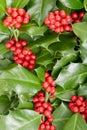 Holly, Christmas Decoration Ba...