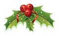 Holly christmas this image is a vector file representing a plant Royalty Free Stock Photo