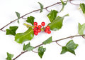 Holly and Ivy Royalty Free Stock Photography