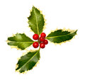 Holly leaf corner christmas leaves and berries item for festive borders at christmastime Royalty Free Stock Images