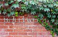 Hollywood sign and the Boston Ivy