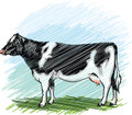 Holstein cow illustration Royalty Free Stock Images