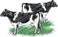 Holstein cow illustration Stock Photography