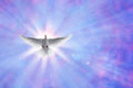 Holy spirit dove on shining sky with rays Royalty Free Stock Photo
