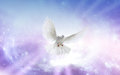 Holy spirit dove white in a blue purple sky symbol of faith Royalty Free Stock Photo