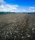Holyland series plain of manasseh ramot manasseh trees cloudy sky stone field mud the menasseh known also as menashe is a Royalty Free Stock Photography