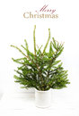 Home christmas tree in a white jar not adorned elegant scandin scandinavian minimalist design concept with easy removable sample Royalty Free Stock Image