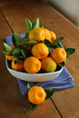 Home grown calamondins freshly picked and ready to eat although a little sour Stock Images