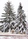 Home hidden by snow