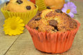 Home made chocolate chip muffins Royalty Free Stock Image