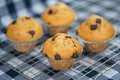 Home made tasty chocolate chip muffins on cooling rack straight out of oven Royalty Free Stock Photo