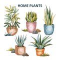 Home plant illustration 01