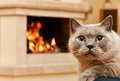 Home Spirit. Cat By The Firepl...