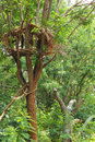 Home On A Tree In The Garden W...