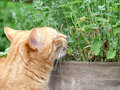Homecat red tiger in the garden Stock Photos