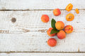 Homegrown apricots on vintage white wooden table fresh view from above Royalty Free Stock Photos