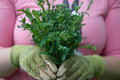 Homegrown garden greens closeup of young woman holding fresh gai lan haida gwaii bc canada Stock Photos