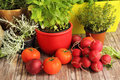 Homegrown herbs and vegetables tomatoes horseradish Royalty Free Stock Photo
