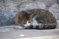 Homeless cat sleeping on the street Royalty Free Stock Image