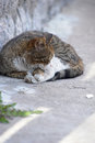 Homeless cat sleeping on the street Royalty Free Stock Images