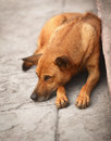 Homeless dog on the pavement Stock Photos