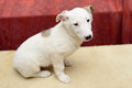 Homeless puppy in shelter Royalty Free Stock Photo