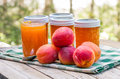 Homemade apricot jam or preserves jars of Stock Images