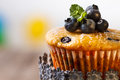 Homemade blueberry muffins in paper cupcake holder Stock Photography