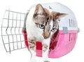 Homemade cute cat out of the cage on a white background Royalty Free Stock Image