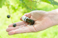 Homeopathic globules lactose sugar on hand with plants outdoors Stock Photos
