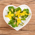 Homeopathy and cooking with celandine Royalty Free Stock Photo