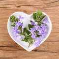 Homeopathy and cooking with ground ivy Royalty Free Stock Photo