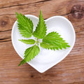 Homeopathy and cooking with stinging nettle